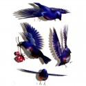 Tatouage temporaire oiseaux 3D