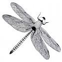 Tatouage temporaire libellule